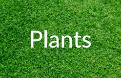 Markham-Grange-Garden-Cente-Garden-Plants