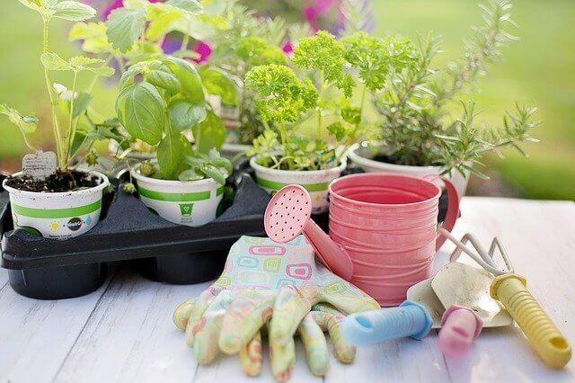 Markham Grange Garden Centre - plants
